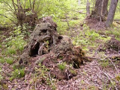 Metsik loodus on ilus, aga tulel on seal kerge toimetada.  Foto: Üllas Linder - pics/2006/13600_2.jpg