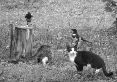 Igal linnul ja loomal on toiduahelas oma kindel koht.  Foto: V. Polikarpus - pics/2006/14483_2_t.jpg