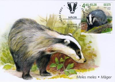 """The latest in the Estonian series of fauna stamps features the MÄGER (Eurasian badger, Meles meles), with its distinctive black and white striped face. The infamous North American masked raccoon (pesukaru, """"washing bear""""), does not reside overseas, but has given the similar looking, albeit unrelated, invasive raccoon dog (kährik-koer) its name. - pics/2007/15822_1_t.jpg"""