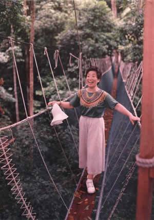 Canopy Walkway Design and        Installation Workshops and Consulting - pics/2008/04/19560_1.jpg