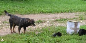 Betty ja pojad.   Foto: Viido Polikarpus - pics/2008/09/20820_1_t.jpg