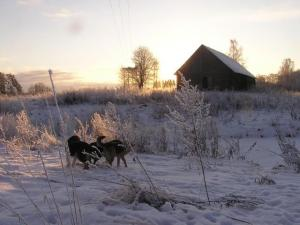 2009. aasta 1. jaanuari hommik Kurenurmes.  Foto: V. Polikarpus - pics/2009/01/22400_1_t.jpg