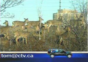 Kitsed linnas. CTV - pics/2009/03/23057_2_t.jpg