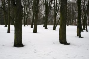 Kunagisest kalmistust on näiliselt järel vaid põlispuud. - pics/2009/11/25866_26_t.jpg