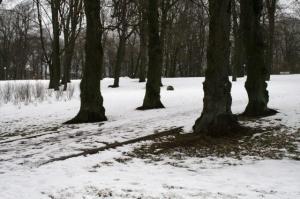 Kas kunagised hauaplatsi ääristavad pärnad? 1950datel tehtud uued pargirajad loodi suvaliselt, siin näiteks tõenäoliselt otse üle haua.            Fotod: Riina Kindlam - pics/2009/11/25866_29_t.jpg