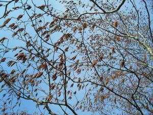 Lepaurvad mahlakuul. Teised rahvapärased aprillikuu nimetused on veel sulakuu, vetekuu, porikuu... aga ka linnukuu. - pics/2010/04/27803_33_t.jpg