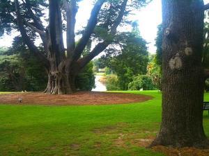 18. veebr. Melbournei park Austraalia - pics/2011/02/31431_1_t.jpg