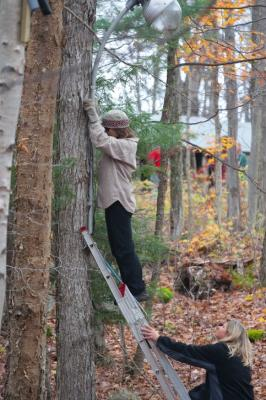 Raja Raudsepp lampi puuküljest eemaldamas, Tiia Vessmann hoiab redelit. Foto: Kerly Ilves - pics/2011/11/33906_3_t.jpg