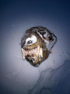 Räätsamatka käigus leitud karukolju Kõrvemaal. Foto: Triin Ivandi - pics/2012/02/35250_002_t.jpg