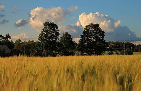- pics/2012/07/36971_001_t.jpg