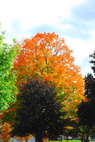 - pics/2012/10/37581_026_t.jpg