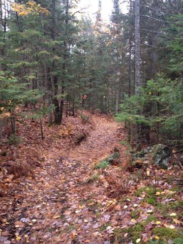 Saunatagune tee, mis viib Koprajärvele, oli nägusa lehevaiba kattes vaikne ning rahulik, kannatlik matkaja võis isegi hirve või muud metsaelaniku silmanurgast märgata…  - pics/2012/10/37706_004_t.jpg