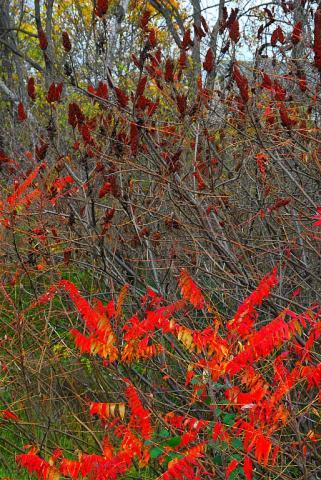 - pics/2012/11/37859_001_t.jpg