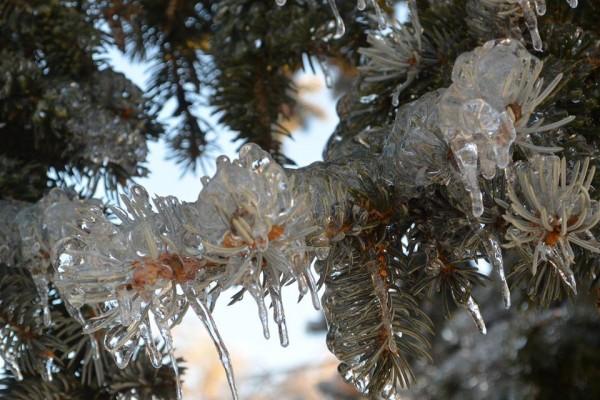 Foto Kaupo Kallemaa - pics/2013/12/41008_001_t.jpg