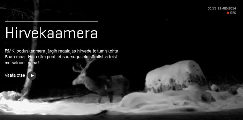 1e6f44f5cde RMK looduskaamera näitab punahirvi - Estonian World Review