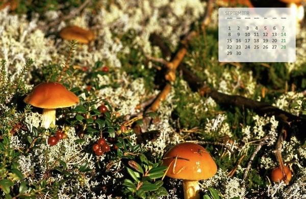 - pics/2014/09/43001_001_t.jpg