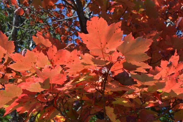 - pics/2014/10/43254_023_t.jpg