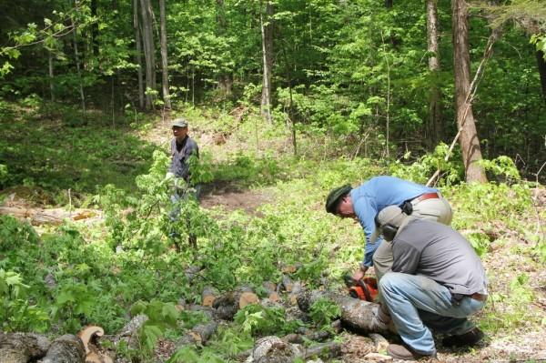 Tulevase lasketiiru maaalalt koristavad puid TEPP liikmed Tauno Mölder, Markus Alliksaar ja Margus Jukkum - pics/2016/05/47707_002_t.jpg