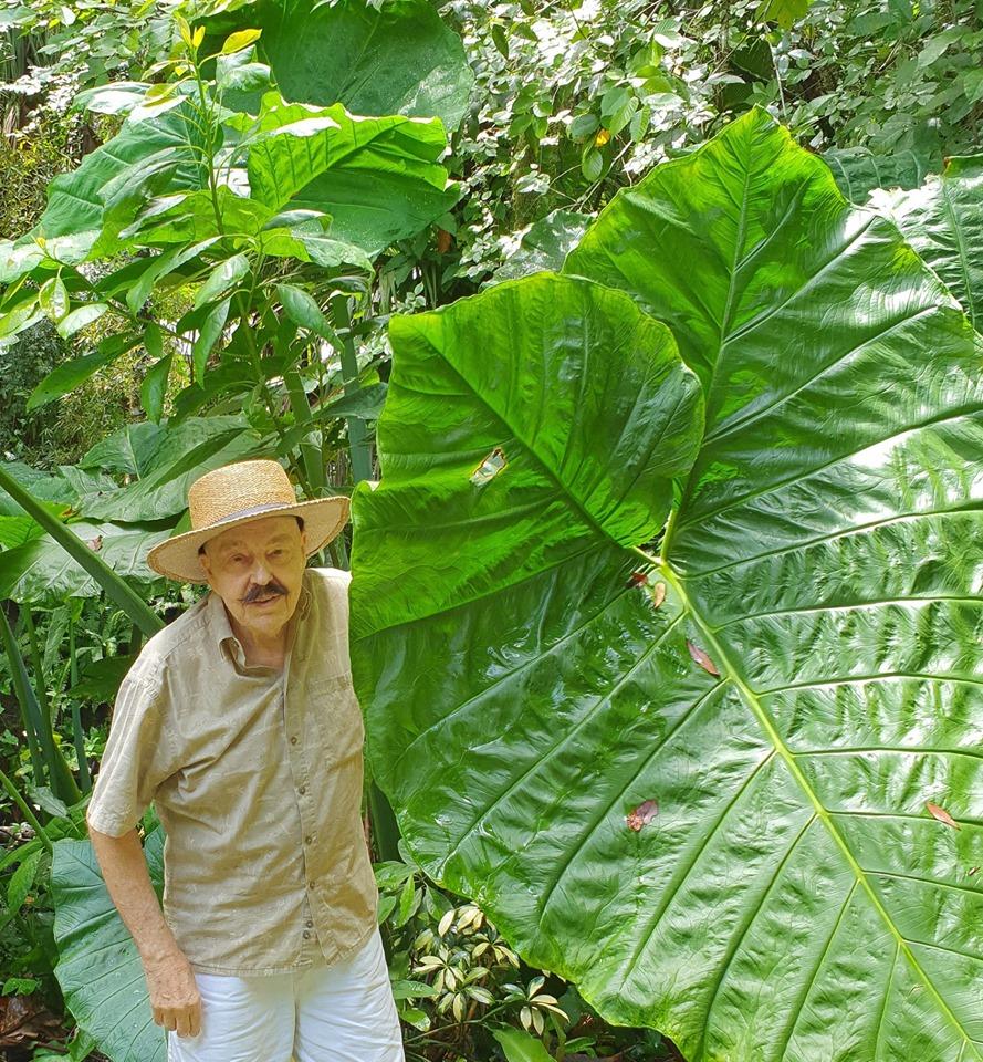 Jüri Toomepuu - Palmid, männid, tammed, küpressid ja elevandikõrvad